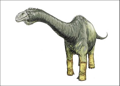 Rare dinosaur discovered in Western Colorado | Science Buzz