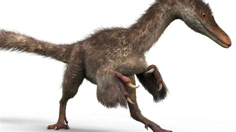 Rare dinosaur tail found in Myanmar market | Newshub