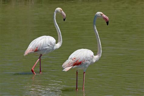 Ras Al Khor Wildlife Sanctuary   Dubai   Vakantie Arena
