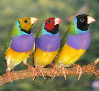 RAS Avichat: Representation of groups of birds we keep