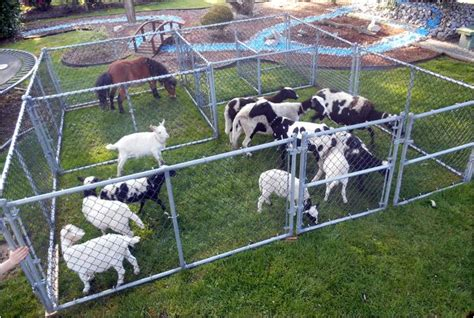 Rates|Mobile Petting zoo pricing, packages and options ...