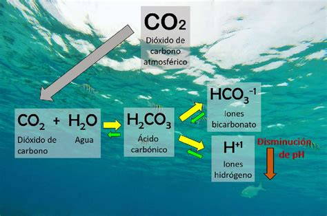 Reacción química generada por la absorción de dióxido de ...