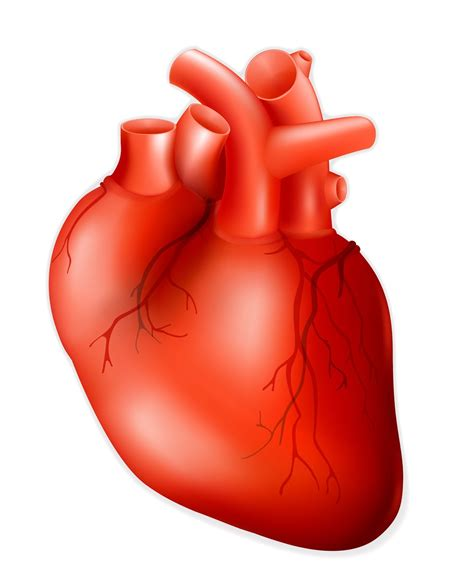 Real Heart Drawing | Free download on ClipArtMag