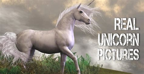 Real Unicorn Pictures: A Visual Collection of Unicorn ...