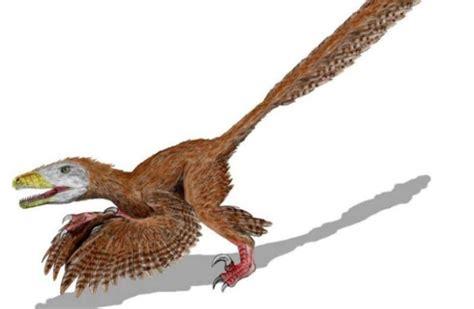 Real Velociraptor V.S Jurassic World | Science Amino