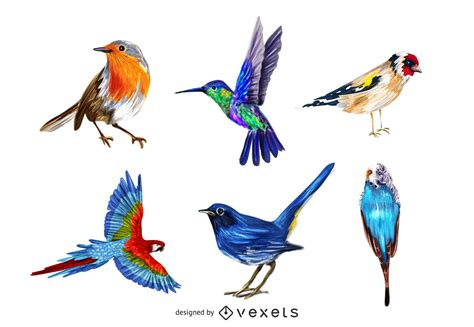 Realistic Colorful Bird Pack   Vector download