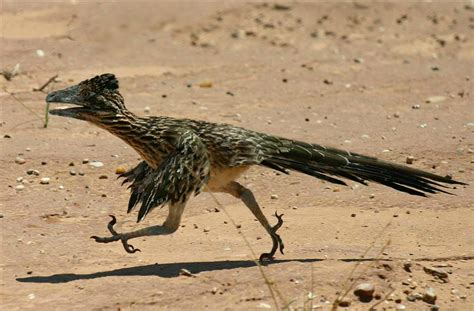 Realistic Raptor by SporemasterHIMPO on DeviantArt