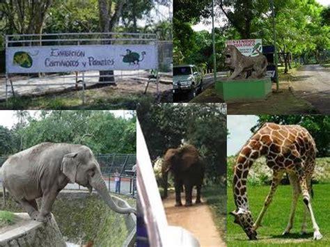 Recibirá el Zoológico Nacional nuevos animales   Agencia ...