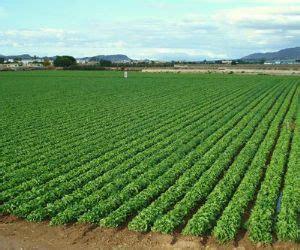 Recientes lluvias enriquecen los cultivos