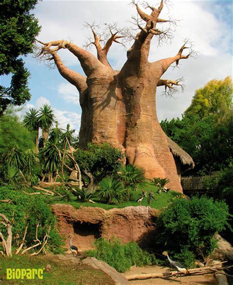 Recreated natural habitats at Bioparc Fuengirola Zoo | Essence