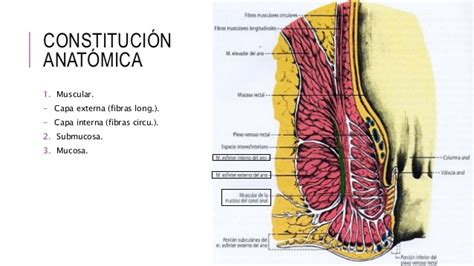 Recto y canal anal
