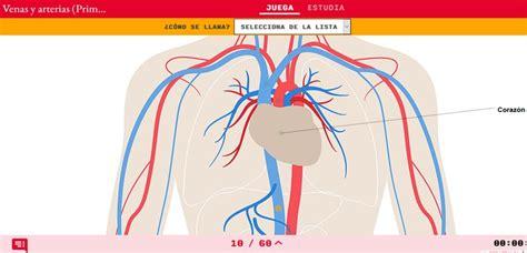 Rectoria Instenalco: 12 Juegos del aparato circulatorio en ...