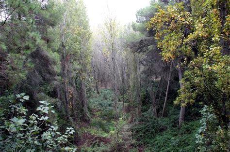 Recuperar el bosque mediterráneo   Las Provincias