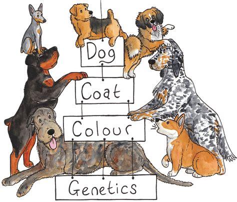 Red Baiduri: The Genetics and Heritability of Dog
