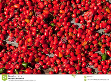 Red Hot Chili stock image. Image of spreaded, spread ...