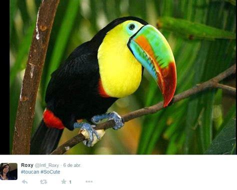 REDES SOCIALES: Posiblemente uno de los pájaros mas bellos ...