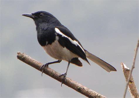 Reducción de población de aves insectívoras estaría ...