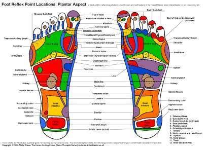 reflexology foot chart   Reflexology Charts. Foot and Hand ...