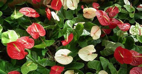 Refranes y plantas que florecen en el mes de septiembre