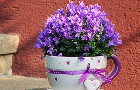 Regalar flores, o mejor, regalar una planta   Busca Regalo