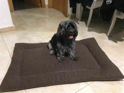 regalo   Cama para perros y cosas para protectoras ...