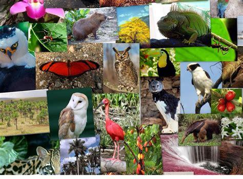 Región de la Amazonía   Screen 7 on FlowVella ...