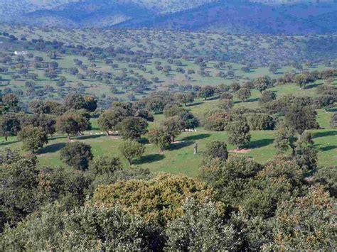 Región mediterránea. Bosque perennifolio. | Bosque ...