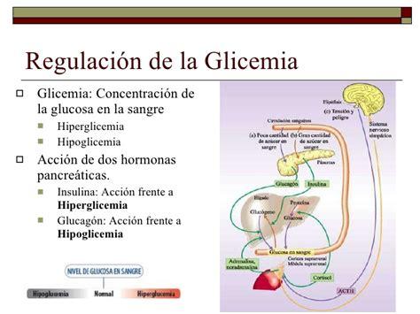 Regulacion de la glucemia yahoo