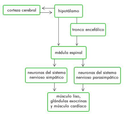 Regulación de la homeostasis