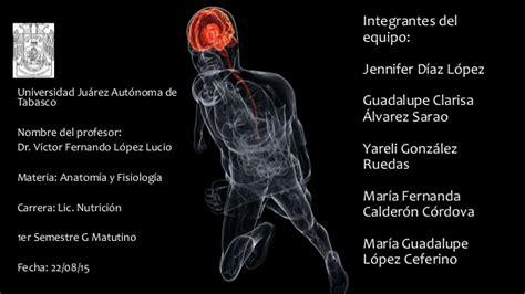 Regulacion y control de las distintas funciones corporales ...