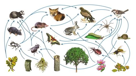 Relaciones y factores que inciden en una red trófica