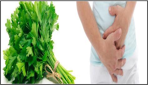 Remedios con perejil para limpiar la vejiga   Salud Más ...
