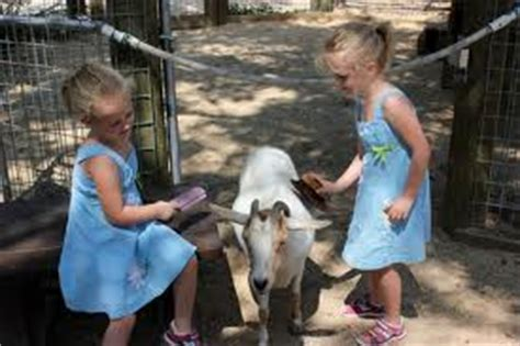 Rent a Children s Petting Zoo in Los Angeles! | Fun ...