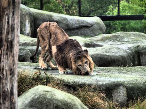 Réouverture du Parc zoologique de Paris: premiers bilans