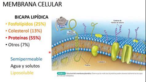 REPASO INTERGALÁCTICO DE FISIOLOGÍA: CAPÍTULO 2 ...
