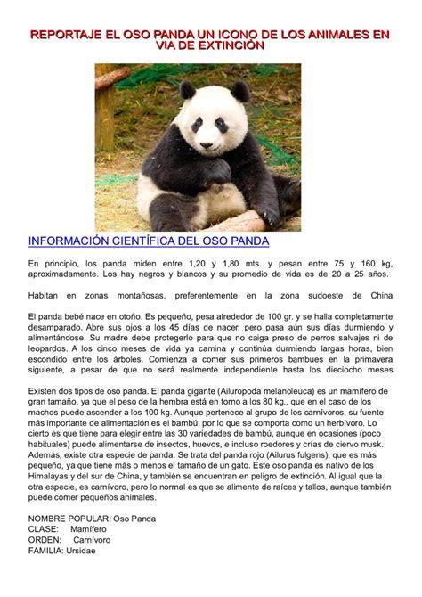 REPORTAJE EL OSO PANDA UN ICONO DE LOS ANIMALES EN VIA DE ...