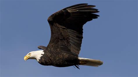 Reportajes y fotografías de Aves en National Geographic