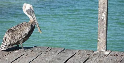 Reproducción de aves costeras en Sian Ka an, Quintana Roo ...