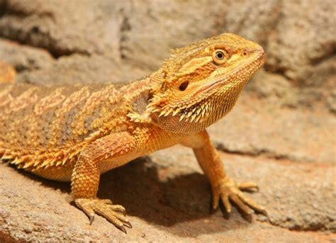 Reptile Parasites   petMD
