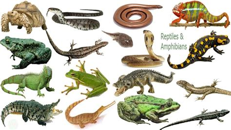 Reptiles & Amphibians Name Meaning & Picture   সরীসৃপ্ ...
