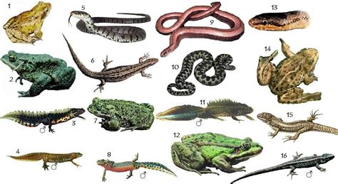 Reptiles and Amphibians of the UK Quiz   By spikeharby