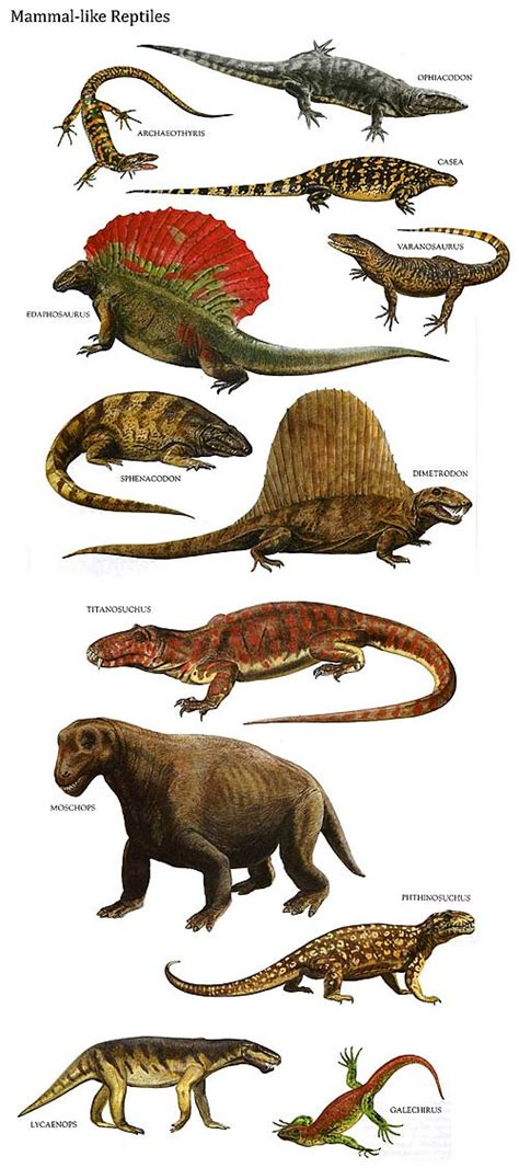Reptiles   Animal Pictures and Facts   FactZoo.com