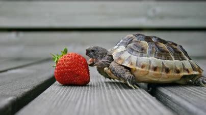 Reptiles   Blog Tiendanimal