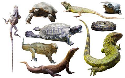 Reptiles Facts, Diet, Types, Behaviour, Habitat [List of ...