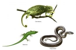 Reptiles Pythons and Lizards