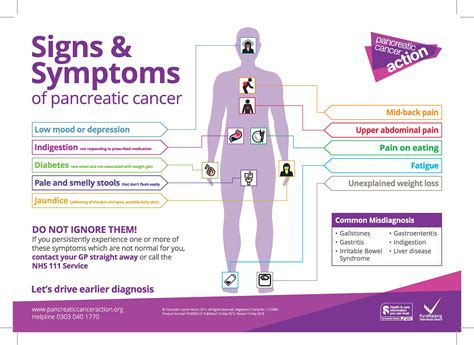 Research solves pancreatic cancer mystery   The ...