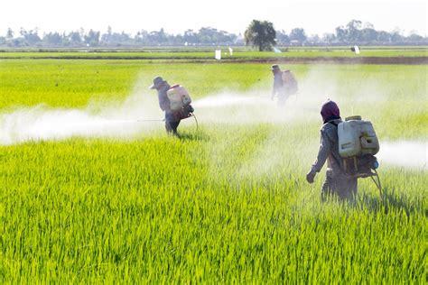 Residuos de pesticidas en los alimentos y tu salud