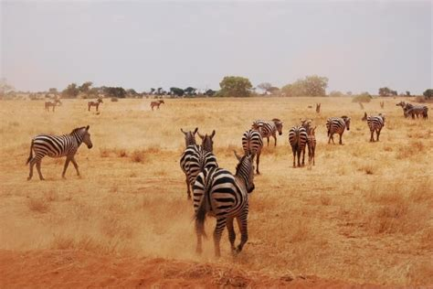 Restricciones de entrada para turistas en Kenia