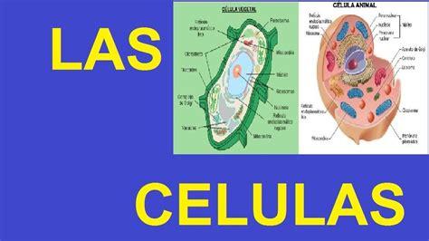 Resultado de imagen de fotos de celulas   Celulas, Fotos ...