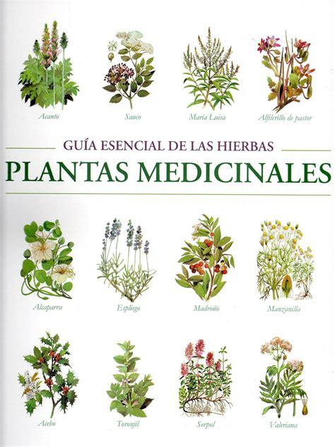 Resultado de imagen de Plantas medicinales | Plantas ...